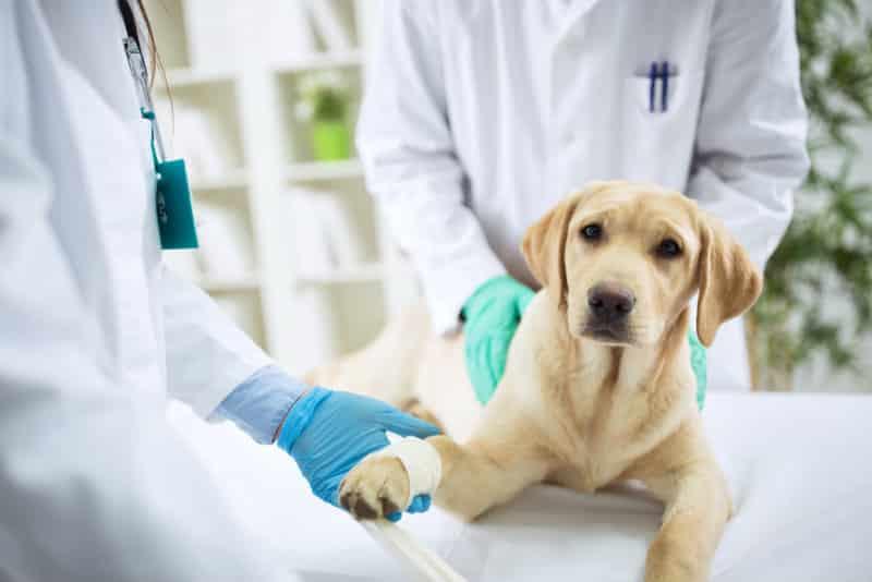 accademia-del-lavoro-assistente-di-studio-veterinario