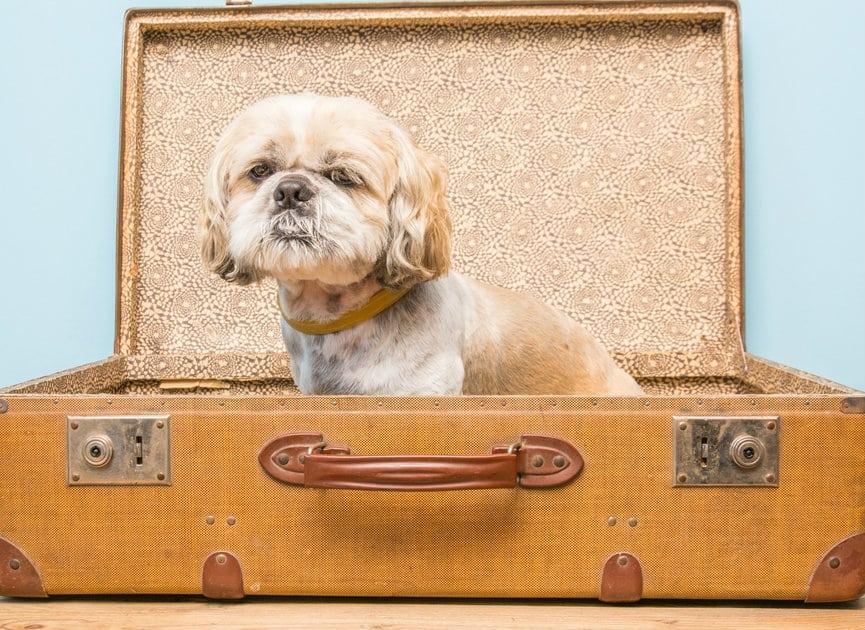 accademia del lavoro viaggiare con gli animali domestici jpg