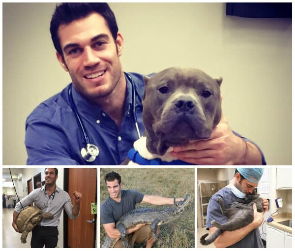 diventare assistente veterinario accademia del lavoro 3