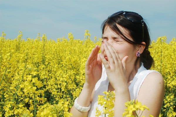 oli aromatici contro le allergie accademia del lavoro