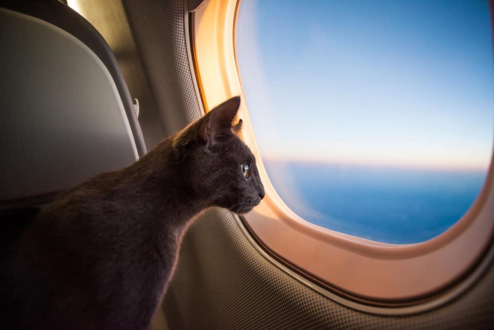 lista animali proibiti in volo accademia del lavoro