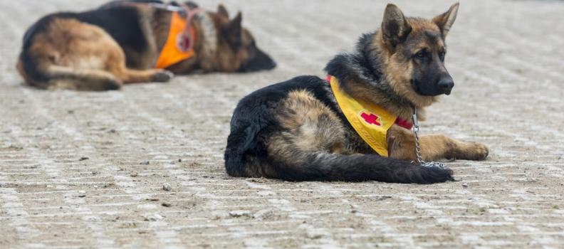 Anche i veterinari per fronteggiare l'emergenza terremoto