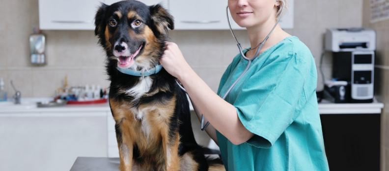 L'assistente di studio veterinario: chi è e cosa fa