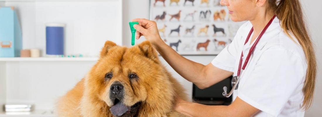 Diventare assistente veterinario? Le 4 qualità da avere