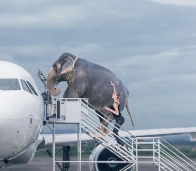 Pet Therapy: la lista degli animali proibiti in volo.